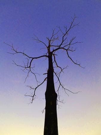 alone tree silhouette Stock Photo - 12134621