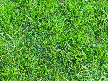 Green grass field - texture Stock Photo - 12770001