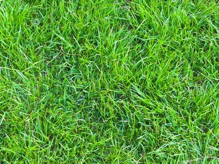 Green grass field - texture Stock Photo
