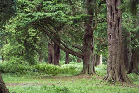 turismo ecologico: Escena madura del arbolado en el tiempo de verano