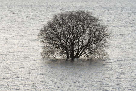 overwhelm: A flooded tree at Carron Valley Reservoir in Scotland
