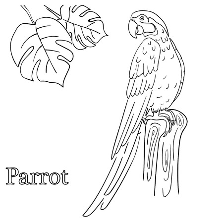 Parrot Coloring Pages For Children Royalty Free Cliparts, Vectors ...