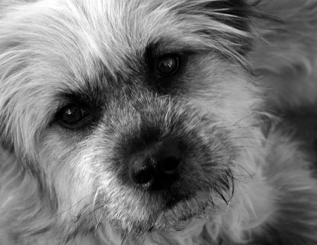 shaggy: Close up of shaggy dog