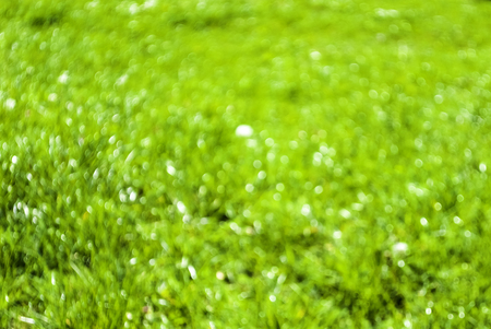 Abstract background of out of focus blurred green field copy space
