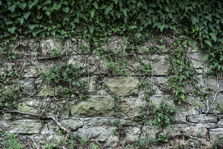 Texture of a stone wall live wall plants roots old castle stone live wall texture background