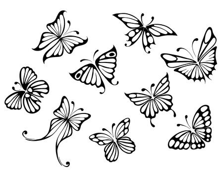 black butterfly: set -- butterflies