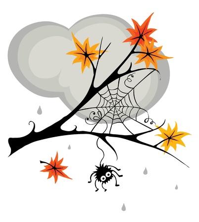 Spider in cobweb in the fall