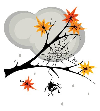 spiders web: Spider in cobweb in the fall