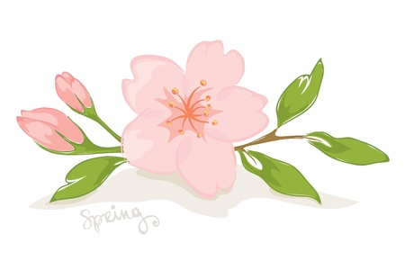 pink butterfly: Spring flower