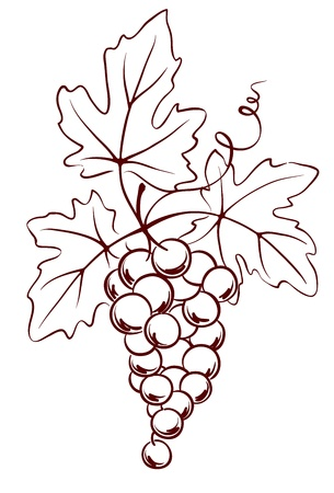 Bunch of grapes with leaves  Stock Vector - 12486466