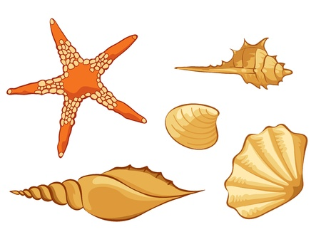 conch: Set of shell  Illustration