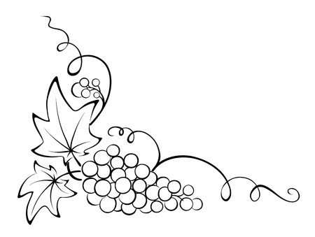 grapes on vine: Design element - Grapevine  Illustration