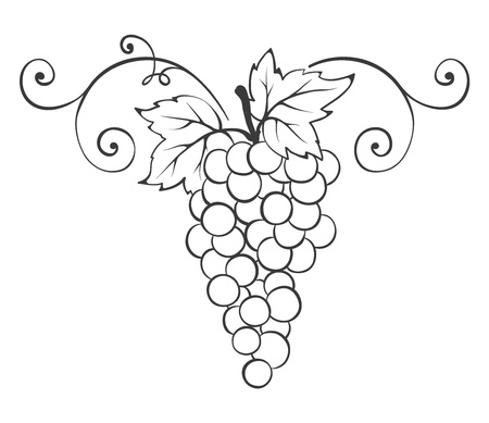 grapes on vine: Grape -- decorative element