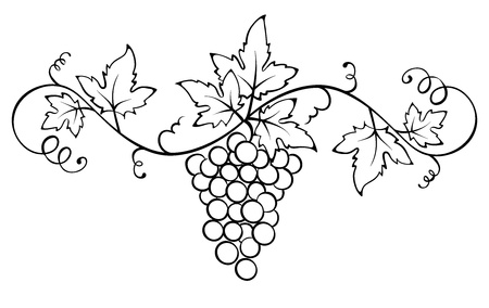 Vector ornament with the vine