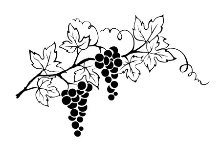 vines: Vector illustration -- grapevine