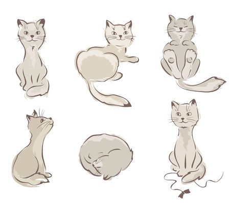 grey cat: Collection of cats