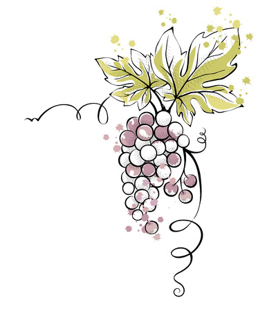 Watercolor illustration, vector -- bunch of grapes 일러스트