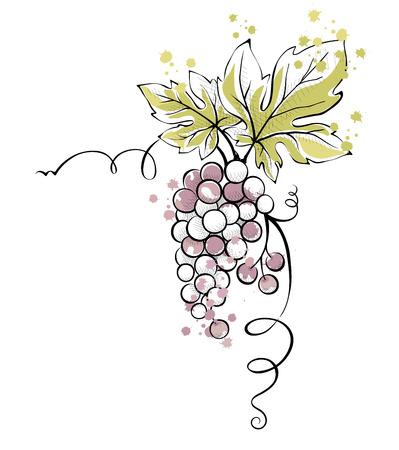 uvas: Ilustración de la acuarela, vector - racimo de uvas