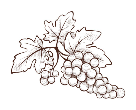 Kwiatowej dekoracji - winogrono Ilustracje wektorowe