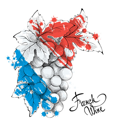Bunch of grapes - the symbol of France. Vector illustration. Vector