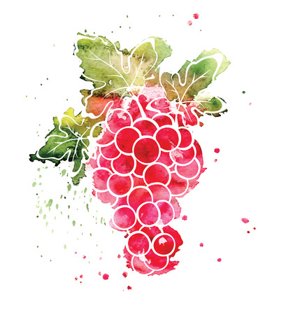 Watercolor illustration - grapes