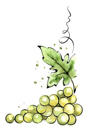 Watercolor illustration  green grapes 일러스트