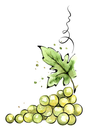 Watercolor illustration  green grapes Ilustração