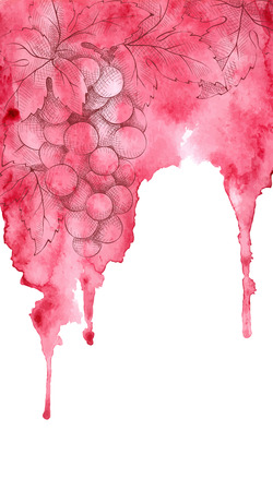 Watercolor vector illustration background  wine