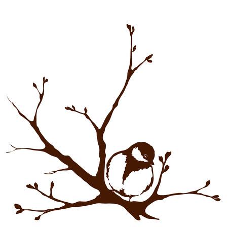 titmouse: A bird on a branch, spring