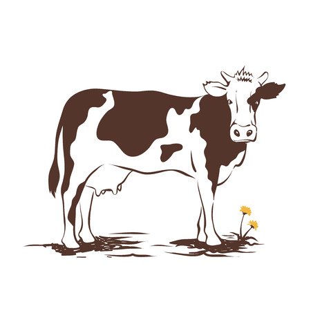 husbandry: Vector illustrations -- cow with dandelion