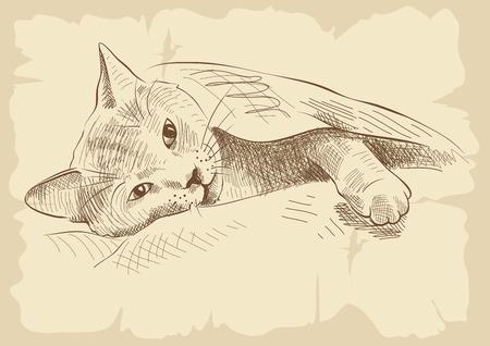 Sleeper Kitty op de bank onder een deken