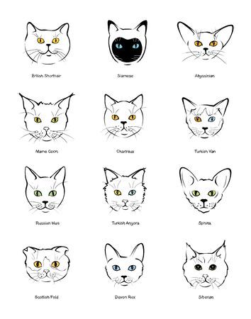 felina Colección amordaza gatitos de diferentes razas Ilustración de vector