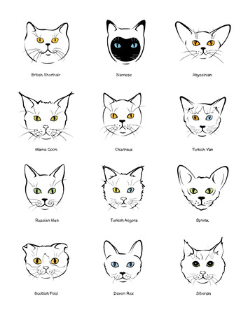 Collection feline muzzles kittens of different breeds