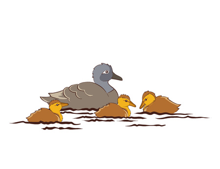 ducklings: Duck family - mother duck and ducklings