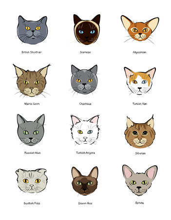 feline: Collection feline muzzles kittens of different breeds