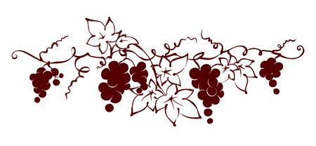 - Los elementos de diseño de la vid / ilustración gráfica del vector, uvas dibujo boceto