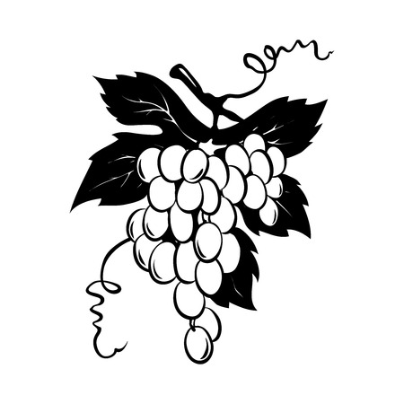 Design elements -- bunch of grapes  Graphic vector illustration, grapes drawing sketch