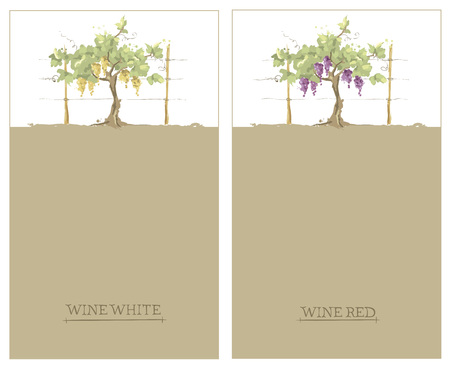 Label for red and white wine -- set  Vector illustration, floral design element, watercolor Ilustração