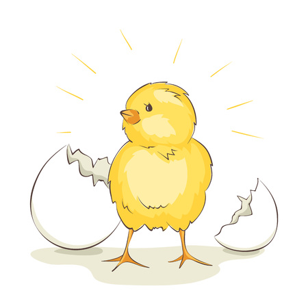 Chick vector illustrations, little bird hatched from egg. Illustration