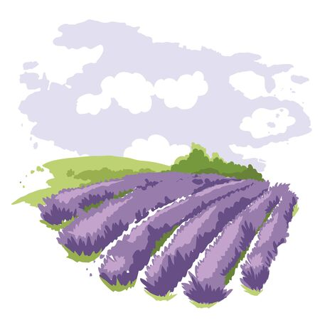 Abstract landscape -- lavender field / Vector illustration, wheat fields and meadows