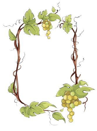 Frame from white grapes. Green grape vine, Vector illustration in watercolor style.
