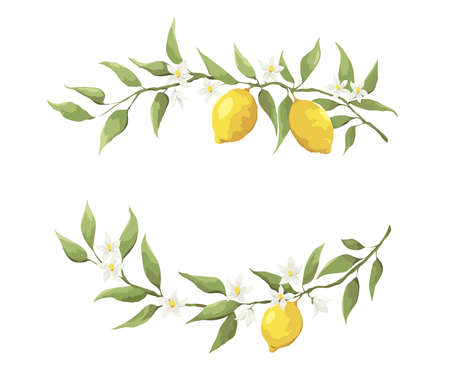 Summer card with lemon branch. Design elements with flowers and fruits, vector illustration, background.
