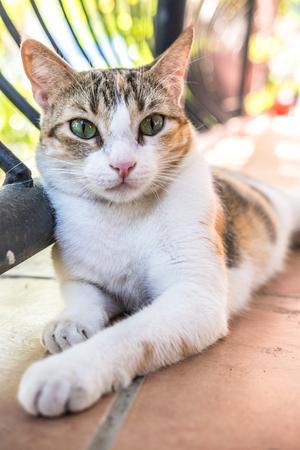 Cat Cute Kitty Kitten Feline Meow