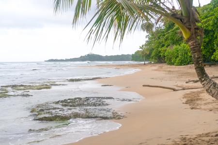 Costa Rica Beach Palm Trees Caibbean Tourism Tourist Paradise Destination Puerto Viejo Caribbean Turquoise Water Beatiful Beach Foto de archivo