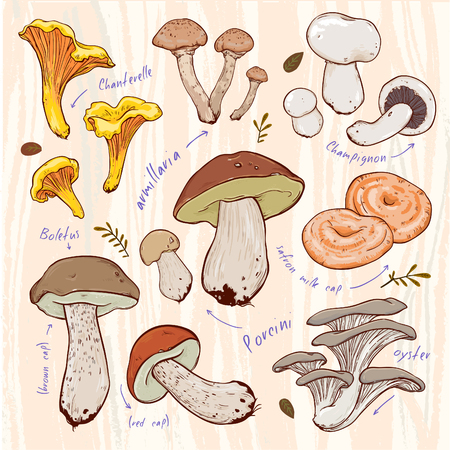 boletus: Stock vector design with mushrooms, leaves and calligraphy. can are used in postcards, calendars, websites, advertising, packages, backgrounds and other design
