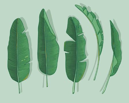 platano caricatura: hojas de plátano