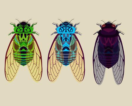 cicada: Cicadas collection part 1