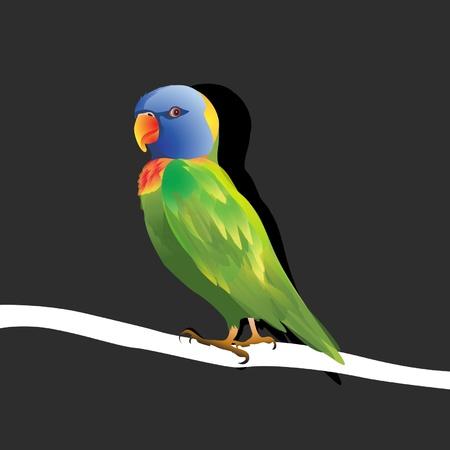 singly: lonely lovebird
