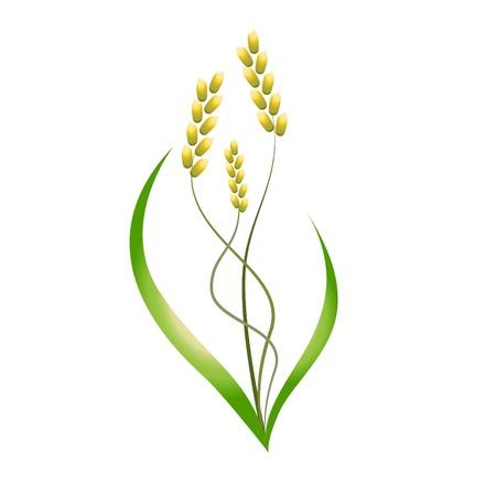 spikes: la planta de arroz, la cebada Vectores