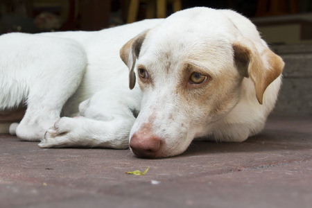 singly: white dog laying on floor